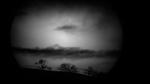 Bryant Austin: Turning Away - Coastal Valley Oak and Sun - Carmel CA, 2016