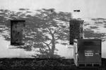 Charity Vargas: Tree Shadow at Thornberg, 2007