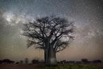 Cosmos Exhibition: Beth Moon - Polaris