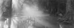David H. Gibson: Cypress Creek, 7:19 AM, November 7, 1996, Wimberley, Texas