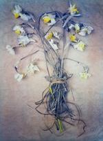 Diana Bloomfield: Daffodils , 2019