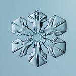 Douglas Levere: Snowflake 2014.02.16.024