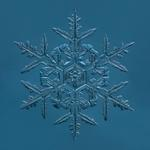 Douglas Levere: Snowflake 2015.02.02.008