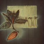 James Hajicek & Carol Panaro-Smith: Botanical/06-5