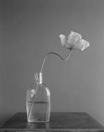 James Pitts: Poppy Glass Vase Steel Table