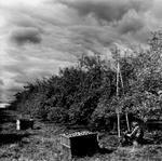Jon Edwards: Tea Before the Storm, 2007