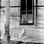 Jon Edwards: Winter Window, 2007