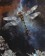 Jo Whaley: Odonata