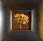 Kate Breakey: Spider Chrysanthemum