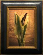 Kate Breakey: Tulip Bud