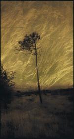 Kate Breakey: Tree, South of France