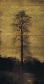 Kate Breakey: Single Tree (by lake) Kew Gardens