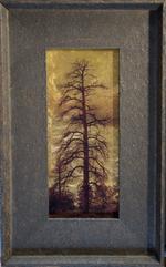 Kate Breakey: Dead Pine, Show Low, White Mountains, Arizona