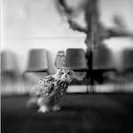 Keith Carter: Classroom