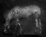 Kindred Spirits: Keith Carter – Leopard Appaloosa, 2014