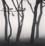 Michael Kenna: Chikui Cape Trees, Muroran, Hokkaido, Japan, 2002