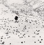 Michael Kenna: Two Hundred and Seven Sheep, Rakaia Valley, Canterbury, New Zealand, 2013