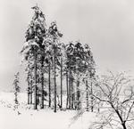 Michael Kenna: Ezo Spruce Trees, Hokkaido, Japan
