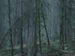 Michael Lange: WALD | Landscapes of Memory #0768