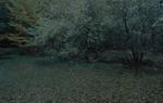 Michael Lange: WALD | Landscapes of Memory #2961