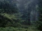 Michael Lange: WALD | Landscapes of Memory #6588