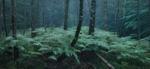 Michael Lange: WALD | Landscapes of Memory #0095