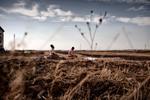 Michele Palazzi & Alessandro Penso: Migrants Praying in the Field, Basilicata, Italy