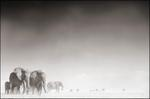 Nick Brandt: Elephant Ghost World, Amboseli, 2005