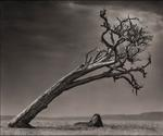 Nick Brandt: Lion Under Leaning Tree, Maasai Mara, 2008
