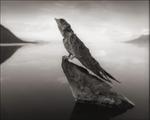 Nick Brandt: Calcified Swallow, Lake Natron, 2012