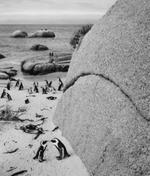 Pentti Sammallahti: Boulders Beach, South Africa, 2002
