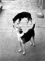 Pentti Sammallahti: Swayambhunath, Nepal, 1994