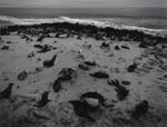 Pentti Sammallahti: Cape Cross, Skeleton Coast, Namibia, 2005
