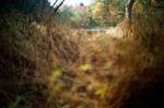 Terri Weifenbach: Woods II 32, 2010