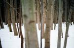 Terri Weifenbach: Woods 15, 2010