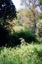 Terri Weifenbach: Woods II 8, 2010