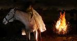 Tom Chambers: Burning Bush