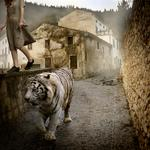 Tom Chambers: Edge of A Dream